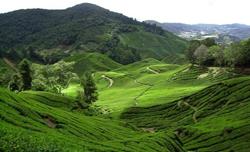 Rondreizen-Maleisie