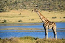 Zuid Afrika rondreizen