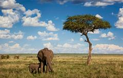 Huwelijksreis Afrika - olifanten in de savanne - Kenia