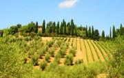 Huwelijksreis Europa - honeymoon in de heuvels van Toscane - Italie
