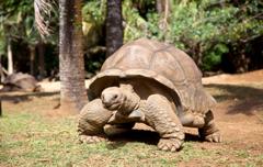 Huwelijksreis Mauritius - Honeymoon eiland - schildpadden