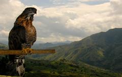 Honyemoon rondreis Sulawesi