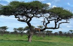 Huwelijksreis Tanzania