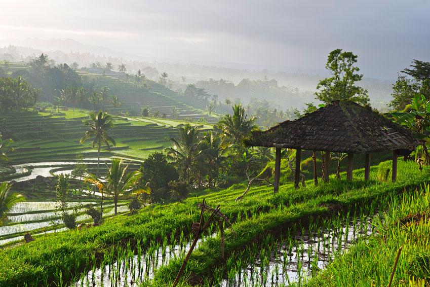 De rijstvelden op het eiland Bali in Indonesie